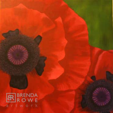 red flowers poppies macrowe