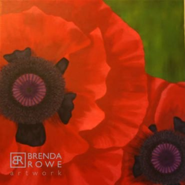 red flowers poppies macrowe