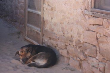 desert dog sleeping new mexico
