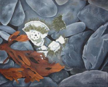 aristotles lantern sea urchin beach rocks seaweed