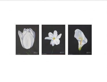 bliss cherish peace white flowers