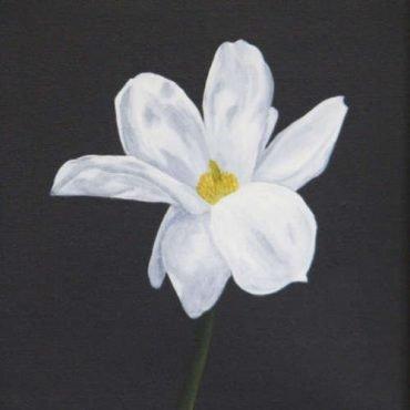 bliss white flower
