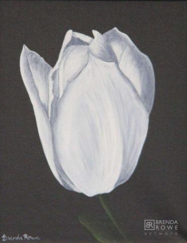 cherish white tulip