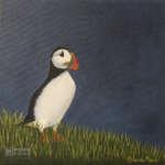 keeping watch atlantic puffin