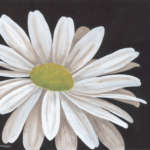 one white daisy