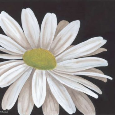one white daisy