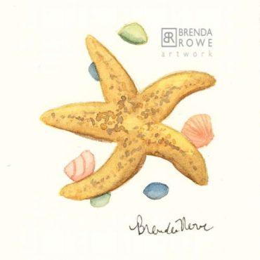 Sea Star starfish